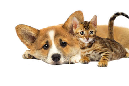 puppy and a kitten are lying together on a white background Stock Photo