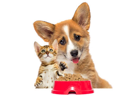cute kitten and dog eat dry food on a white background
