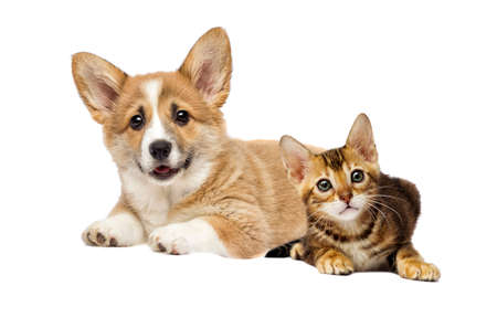 puppy and kitten watching together