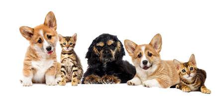 szczeniak i kotek oglądają razem Zdjęcie Seryjne