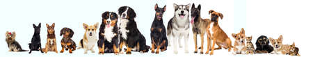set of pets, dogslooking at white background Stock Photo