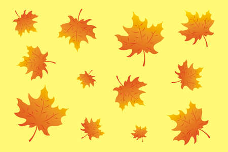 Maple leaves on yelow Stock Vector - 13502611