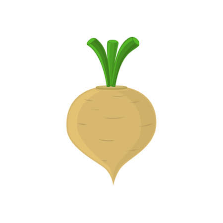 root vegetables: Turnip icon isolated on white background. Vector illustration.