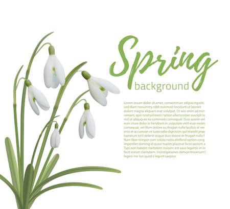 fleurs Snowdrop isolé sur blanc. Spring modèle d'arrière-plan. Vector illustration. Vecteurs