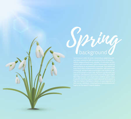 snowdrop: Spring background template. Snowdrop flowers with sun on blue background. Vector illustration. Illustration