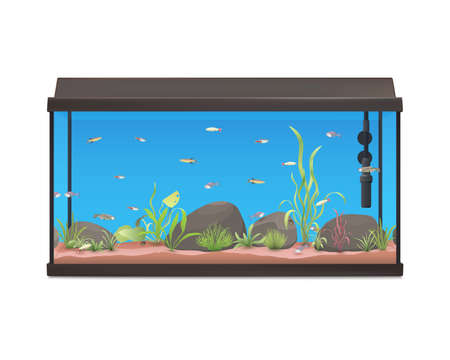Aquarium illustration with fishes stones and plants. Fish tank isolated on white background. Stock vector.