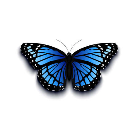 morpho: Realistic butterfly icon isolated on white background.