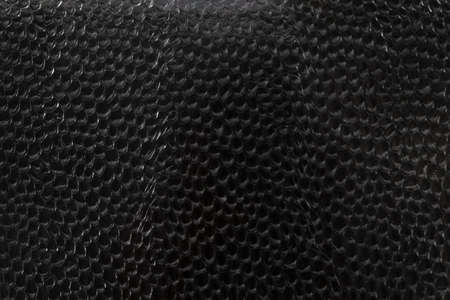 dark glass textured under snake scales highlighted in close-up with slight highlights on irregularities