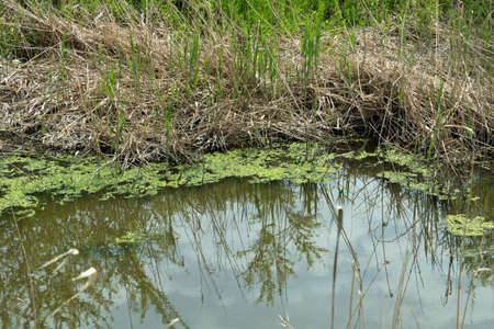 River bank in spring, overgrown with grass, growing through dry stems Stock fotó