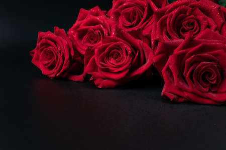 seven large velvety roses lie on a dark gray background with little development