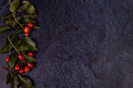 two branches with rose hips lie with leaves on a dark blue velvet fabric