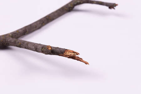a close-up view of a broken branch, and in the background a larger branch, which is its base