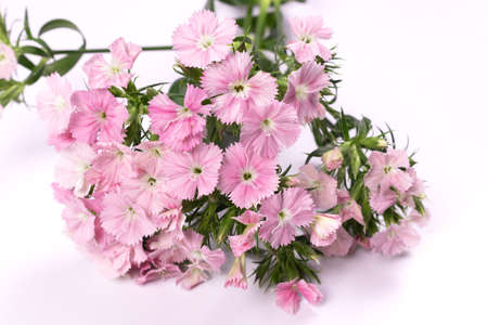 a bouquet of pink flowers lies with flowers on us Stock fotó