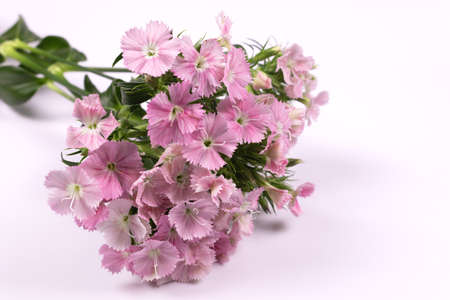 many small pink flowers are collected in a bouquet