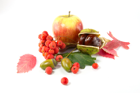 horse chestnut seed: Rowan, an acorn and a chestnut, apple and autumn leaves isolated on white background