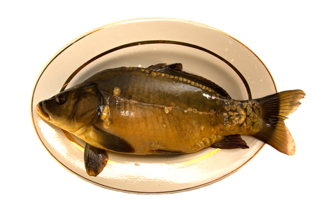 mirror carp: Crude mirror carp lies in a dish isolated on white background