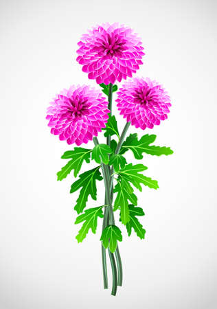 verdure: bouquet of red flower chrysanthemum  illustration