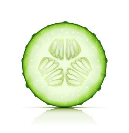 Couper le concombre mûr vecteur du segment illustration isolé sur fond blanc EPS10. Les objets transparents utilisés pour les ombres et les lumières de dessin