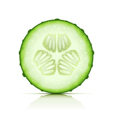 ripe cucumber cut segment vector illustration isolated on white background EPS10. Transparent objects used for shadows and lights drawing Vector