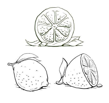 ripe lemon with leaf. vintage set. illustration isolated on white background