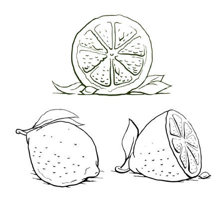 ripe lemon with leaf. vintage set. illustration isolated on white background Stock Vector - 16374273