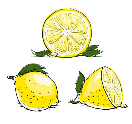 ripe lemon with leaf. vintage set.  illustration isolated on white background  イラスト・ベクター素材