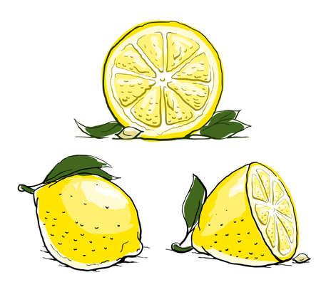 레몬: 리프와 잘 익은 레몬. 빈티지 세트. 그림 흰색 배경에 고립