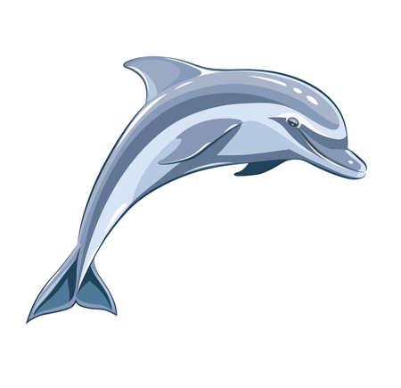 Dolphin.  Vector