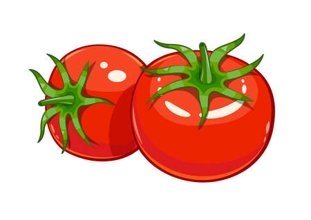 tomatoes: Pair red ripe tomato vector illustration, Eps10 Isolated white background