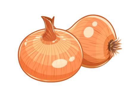 cebolla: Pareja ilustración cebolla