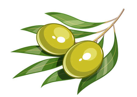 a bough: Pair of green olive vector illustration