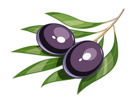 crone: Pair of black olive illustration
