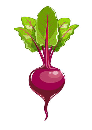 Fresh beet with leaf illustration