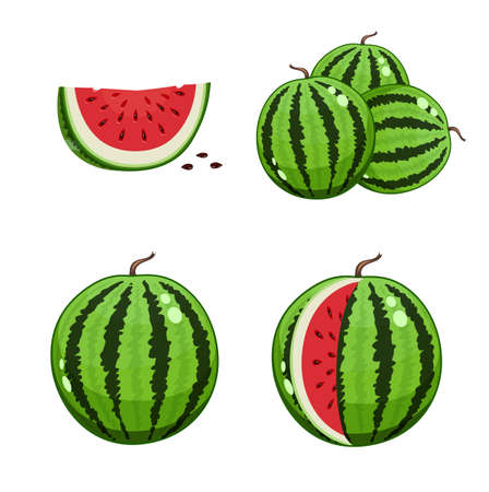 Watermelon and watermelon slice. Set of Vector illustrations.  Vegetarian organic sweet food. Juicy  natural healthy food. Stripy big round fruit. Eps10 Isolated white background