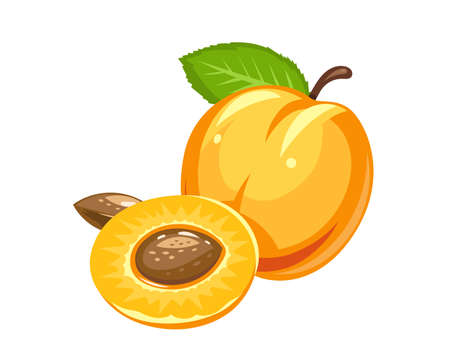 Apricot. Ripe juicy fruit with nut and leaf. Vector illustration, Eps10 Isolated white background. Organic healthy food. Sweet natural ripe peach. Vegetarian meal.