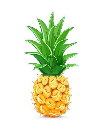 Pineapple with green leaf. Tropical fruit. Exotic vegetarian natural meal. Isolated white background. Eps10 vector illustration.