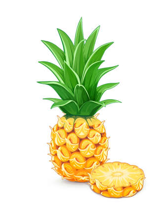Pineapple with green leaf. Tropical fruit. Exotic vegetarian natural meal. Isolated white background. Vector illustration.