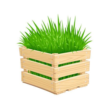 Wooden box with green grass. Gardening Equipment. Isolated white background. Vector illustration. Illustration