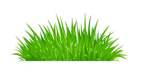 Green grass. Lawn plant. Isolated white background. Eps10 vector illustration.