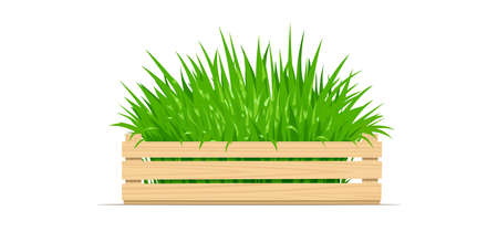 Wooden box with green grass. Gardening Equipment. Isolated white background. Vector illustration. Иллюстрация