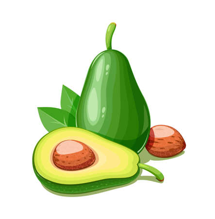 Avocado. Tropical exotic fruit. Natural organic healthy food. Isolated white background.