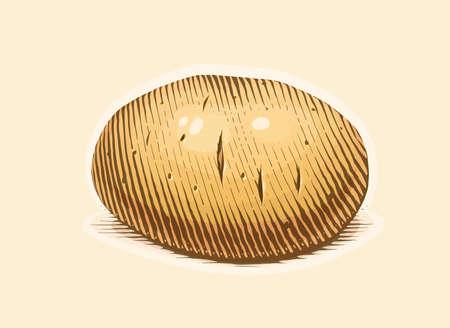Potato. Engraving style vegetable. Organic vegetarian food. Eps10 vector illustration.
