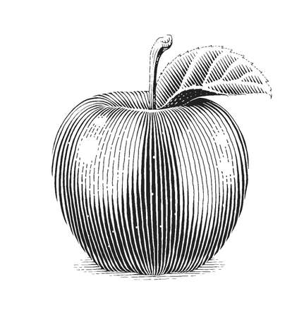 Apple fruit with leaf. Scratch board style. Organic healthy food. Eps10 vector illustration.