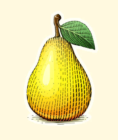 Pear with leaf. Fruit in vintage engraving style. Vegetarian healthy food. Natural organic product.