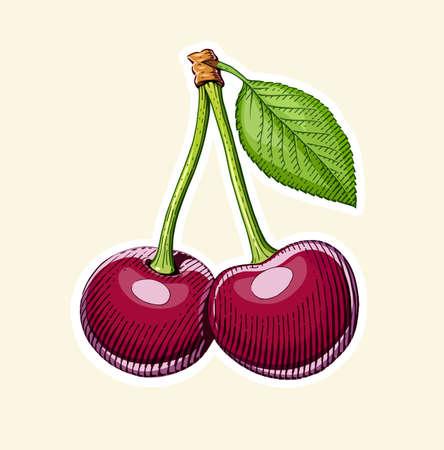 에칭 스타일에 리프 과일과 함께 몇 체리. 채식 건강 식품입니다. 천연 유기농 제품. Eps10 벡터 일러스트 레이 션입니다. 일러스트