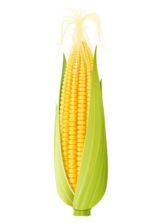 Maiskolben. Bio-Lebensmittel. Maiskolben natürliche Mahlzeit. Reifer Mais. Produkt zum Kochen von Popcorn. Gesundes Essen. Gemüse. Realistisches Lebensmittel. Isolierter weißer Hintergrund. Vektorillustration. Vektorgrafik