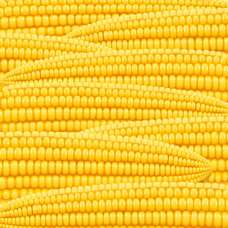 Corn cob. Organic food pattern. Corncob natural meal. Ripe Maize. Product for cooking popcorn. Healthy eating. Vegetable. Realistic foodstuff. Isolated white background. vector illustration.