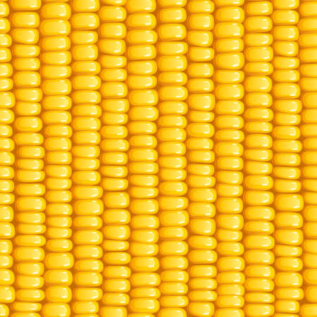 Corn cob. Organic food seamless pattern. Corncob natural meal. Ripe Maize. Product for cooking popcorn. Healthy eating. Vegetable. Realistic foodstuff. EPS10 vector illustration. Illustration