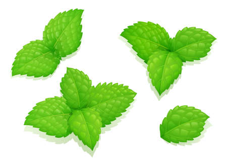 Mint leaves. Peppermint leaf. Set natural aroma product. Healthy food. Pharmaceutics ingredient. Medicine aromatic menthol therapy. Melissa plants. Isolated white background.