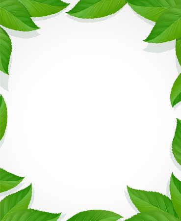 Marco de hojas. Decoración verde con hoja. Fondo floral natural. Decoración realista de follaje. Ilustración de vector Eps10.